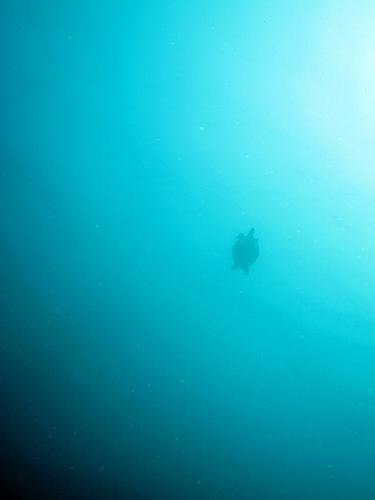 シパダン旅行記 vol.7 サメ三昧のサウスポイント