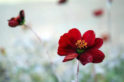 昭和記念公園でiPhone4Sのカメラのすごさを改めて感じてきた