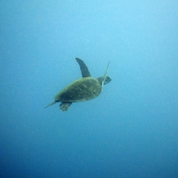 初潜りは沖縄で