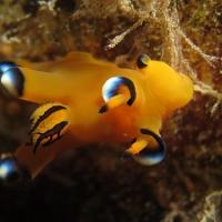 大瀬崎の「海の案内人ちびすけ」でウミウシを見てきた vol.1
