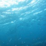 大瀬崎の「海の案内人ちびすけ」でウミウシを見てきた vol.2