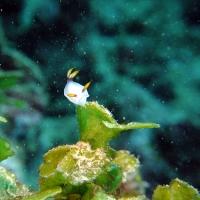 春の沖縄でウミウシ満載ダイビング #1