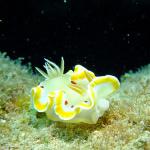 春の沖縄でウミウシ満載ダイビング #2