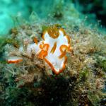 春の沖縄でウミウシ満載ダイビング #4