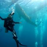 Pcom Dreamでセブ島ダイビングのイメージを一新してきました
