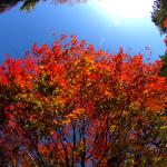 今週末、紅葉を見るなら那須塩原がいいんじゃないかな