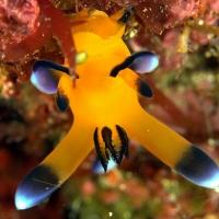 伊豆大島 #3 深場でウミウシ探し