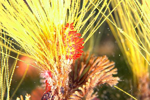 ウミウシシーズンど真ん中の大瀬崎でダイビング 4本目