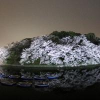 夜桜の名所、千鳥ヶ淵緑道