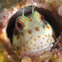 弾丸沖縄ダイビング #1 砂辺浄水場前でウミウシ探し