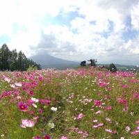 7月から早咲きのコスモスが見られる軽井沢スカイパークへ行ってきた