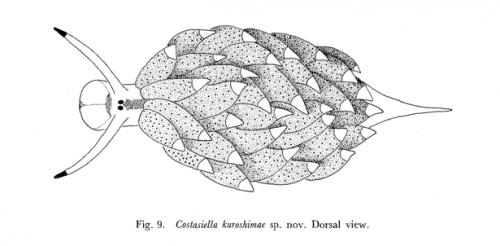 Costasiella kuroshimae s