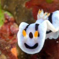 梅雨の沖縄ウミウシダイビング #2 笑顔のダイアナウミウシ