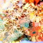 コモド クルーズ #6 これぞコモドの海 Carnival Rock