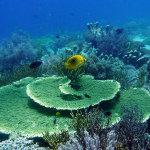 コモド クルーズ #18 ハナダイ群れ群れ Paradise Reef