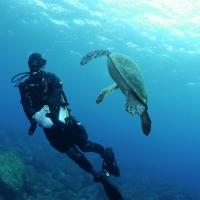 水中ワイドの講習を受けに八丈島へ #2 イルカとウミガメ