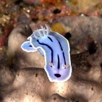 沖縄でウミウシオンリーダイビング