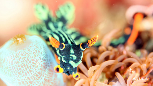 地球の海フォトコンテスト2015入賞作品