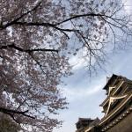 熊本城とサクラ