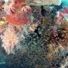 世界遺産・コモドの海 #8 白砂とサンゴとマンタの PARADISE REEF