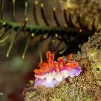 世界遺産・コモドの海 #14 カニだらけナイト TORPEDO ALLEY