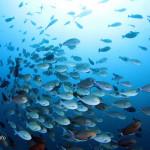 世界遺産・コモドの海 #7  カスミアジが群れる CASTEL ROCK