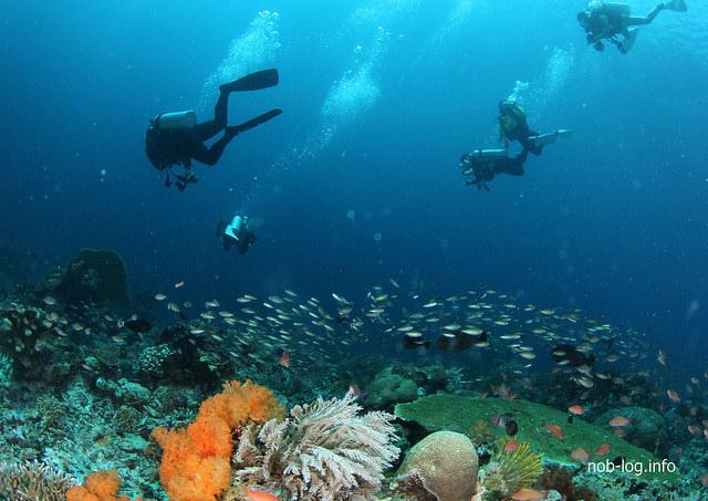 世界遺産・コモドの海 #21 サンゴが綺麗な TATAWA BESAR