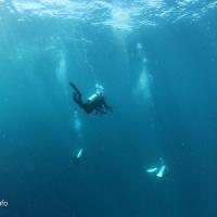世界遺産・コモドの海 #16  ノーノー MANTA ALLEY
