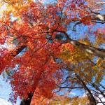 日光・鬼怒川の紅葉を見てきた その2 霧降丿滝