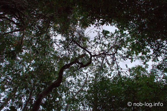 ラジャアンパットクルーズ #13 極楽鳥ウォッチング