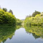 新緑の雲場池