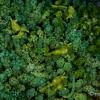 八丈島でウミウシまみれになってきた #5 ナギサノツユ