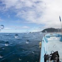 田子の外海でサクラダイを見てきた